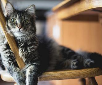 merlix café chats liège