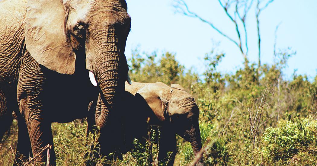 marieclaire_thailande_éléphants