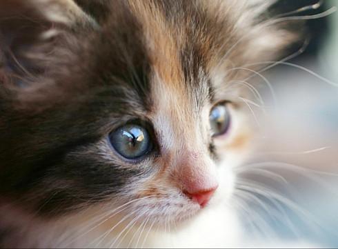 Les 10 choses que vous ignorez probablement à propos de votre chaton