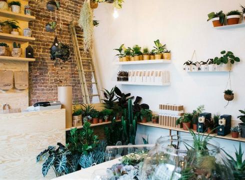 Agave boutique met du green dans votre salon!
