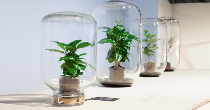 Crush of the day: Pikaplant, la plante qui prend soin d'elle-même