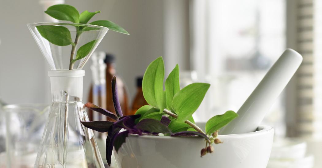 La phytothérapie en cinq questions essentielles