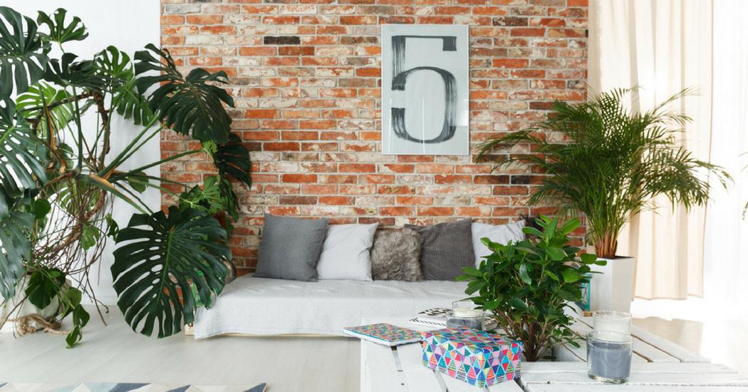 Plantes dépolluantes en 6 points: pourquoi sont-elles bénéfiques pour notre intérieur ?