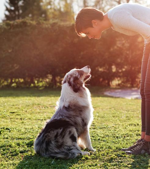 3 activités à faire avec votre chien pour les beaux jours