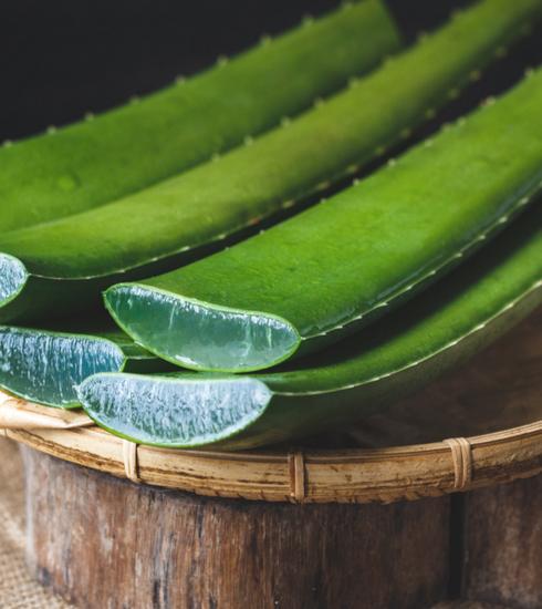 L'Aloe vera, la plante miracle contre les problèmes de peau
