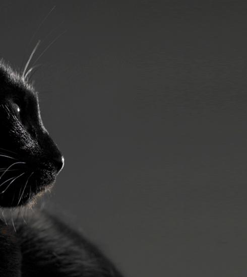 Chat noir, verre brisé & vendredi 13: d'où viennent les superstitions?