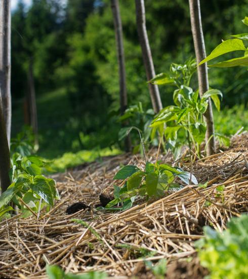 Et si on essayait la permaculture pour un jardin plus respectueux de la nature ?