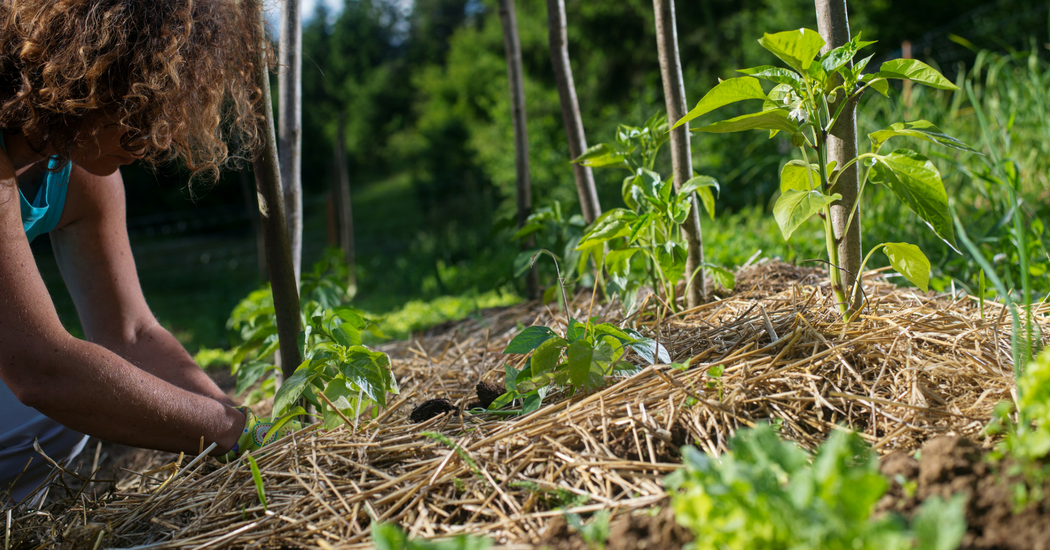 marieclaire-permaculture