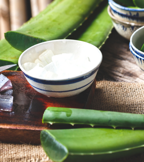 3 manières d'utiliser l'Aloe Vera