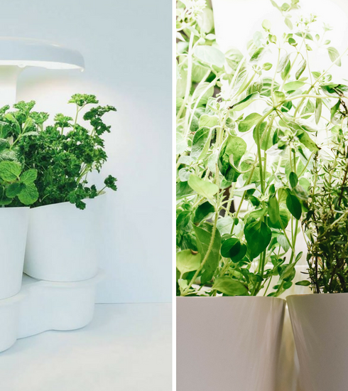 Verdict : Calla Garden, le potager d'intérieur pour des plantes aromatiques increvables