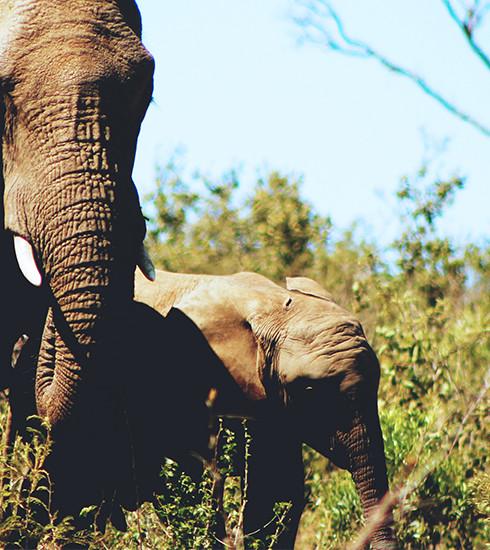 Thaïlande: à la rencontre des éléphants, avec respect et humanité