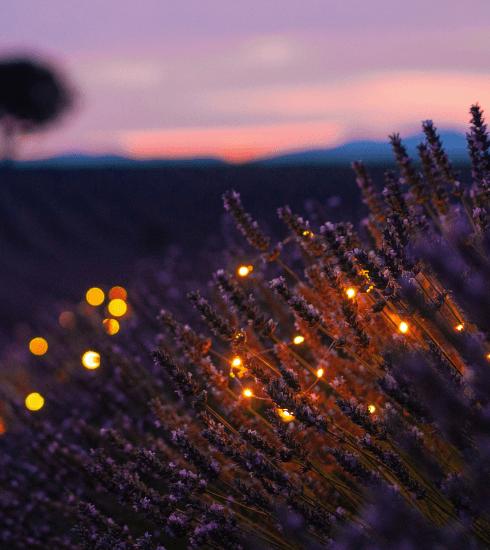 Provence : nos meilleures adresses pour une escapade romantique dans le Luberon