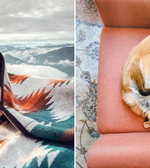4 comptes Instagram à suivre pour les fans d'animaux