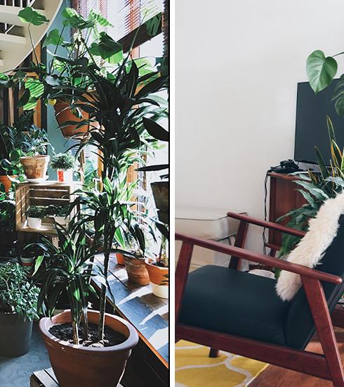 Déco : 10 plantes canon qui vont rendre votre intérieur hyper tendance