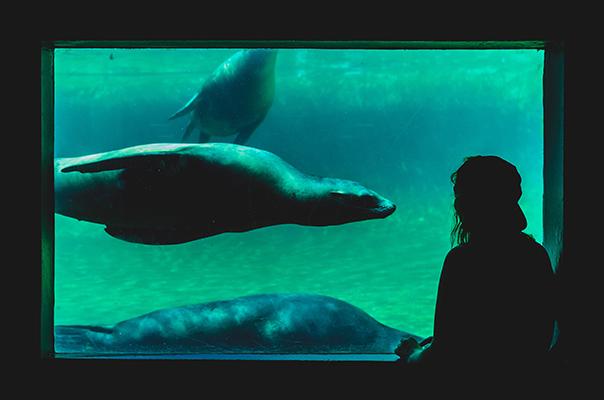 rendez-vous aquarium