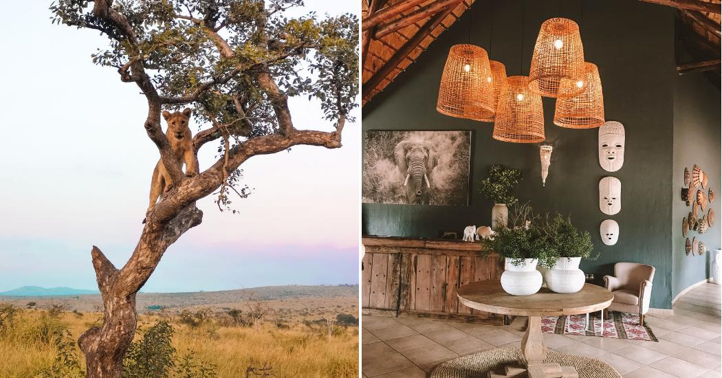 Carnet de voyage : L'Afrique du Sud dans les pas des Big Five