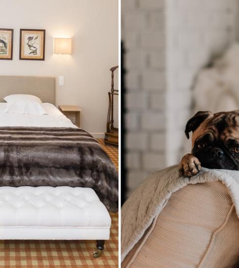 Évasion : 5 hôtels pet-friendly en Belgique
