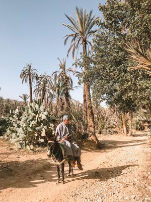 Maroc : le Palais Oumensour, petit coin de paradis au coeur de Taroudant 150*150