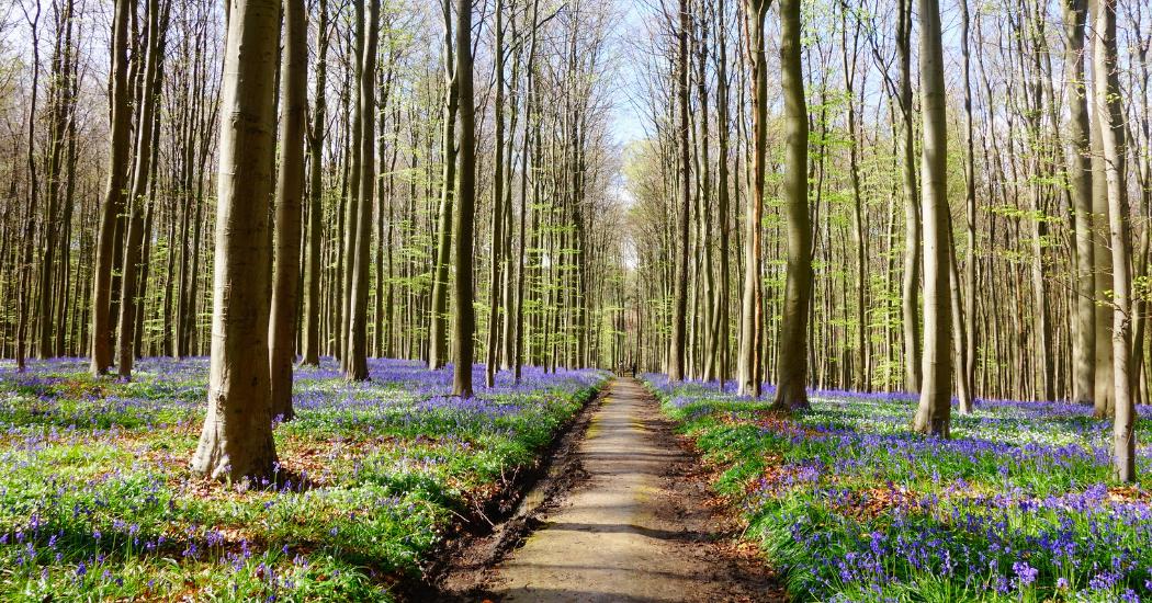 Les plus belles balades fleuries à ne pas manquer ce printemps