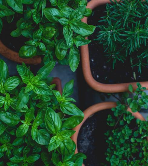 Comment cultiver des plantes aromatiques sur un balcon ?