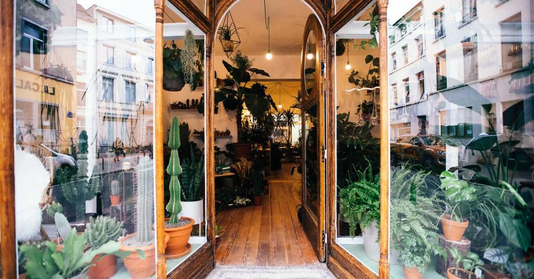 Bruxelles : 3 adresses tendances pour les amoureux de plantes