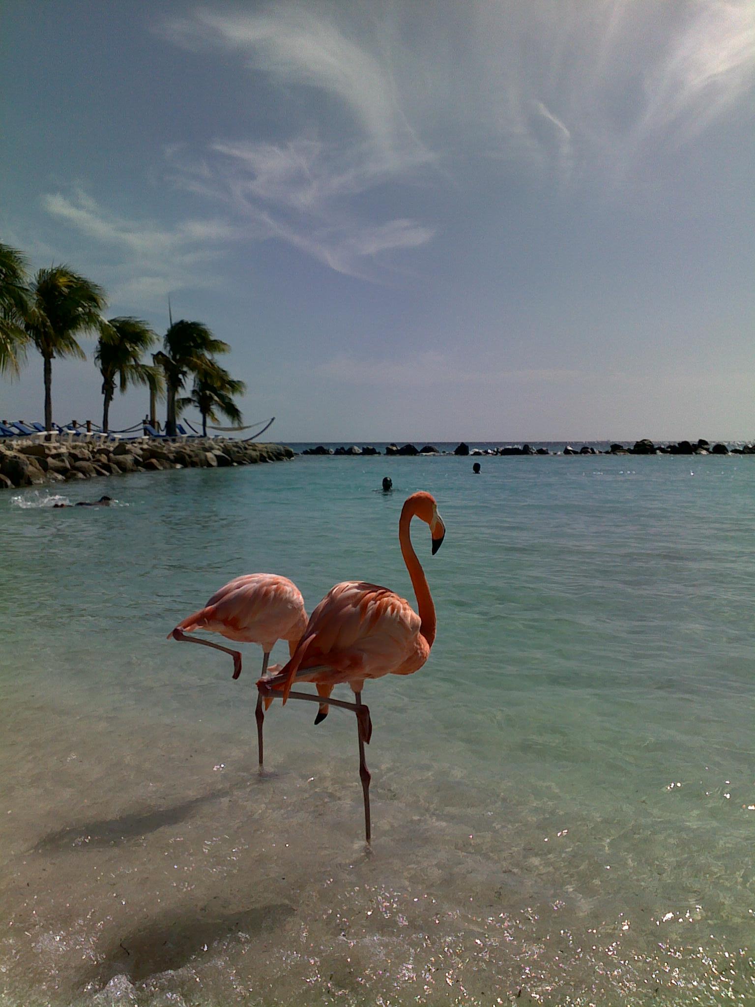 Carnet de voyage : Curaçao, un rêve en couleurs - 6