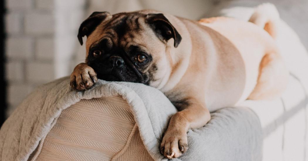 Et pourquoi pas une séance de cinéma avec votre chien ?