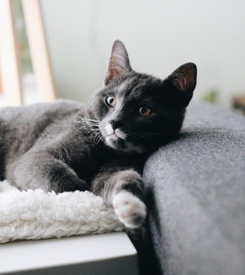 4 façons de faire garder votre animal de compagnie pendant vos vacances