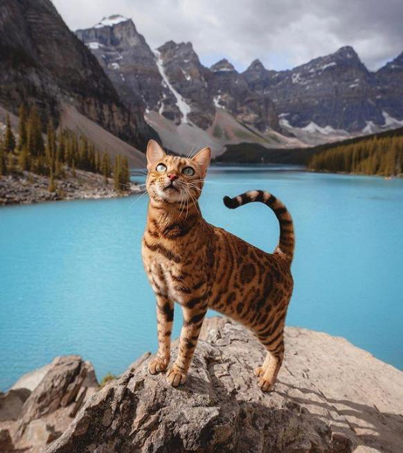 Journée internationale du chat : les 5 meilleurs comptes à suivre sur Instagram