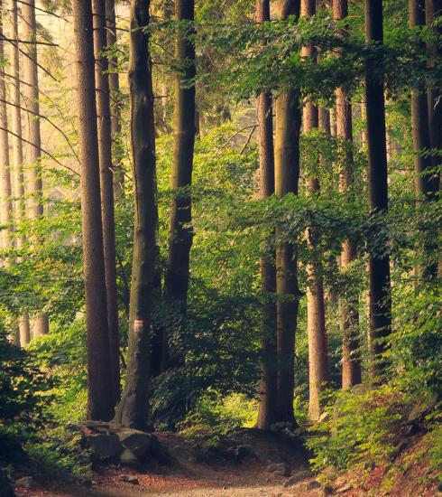 Sylvothérapie : et pourquoi pas prendre un bain de forêt ?