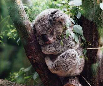 Marie_Claire_Lush_koala_savon