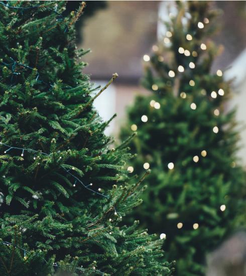 6 endroits où acheter son sapin de Noël tout en faisant une bonne action