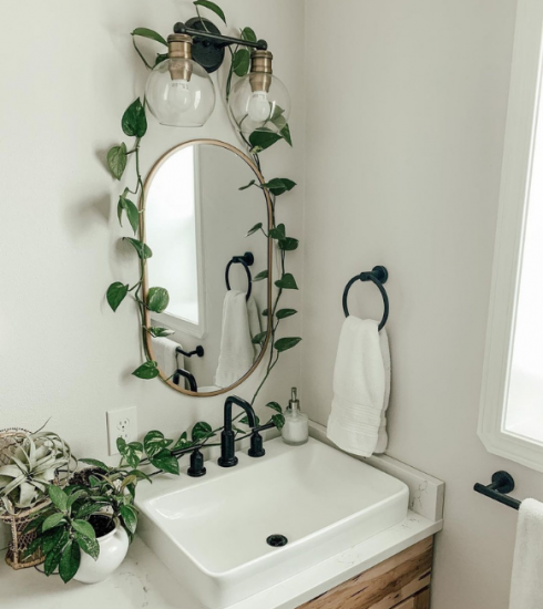 Déco : les plus jolies plantes du moment pour habiller votre intérieur