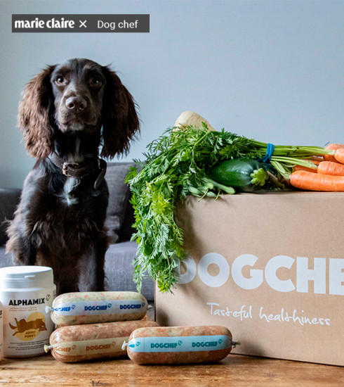 Dog Chef : gamelles healthy pour chiens happy