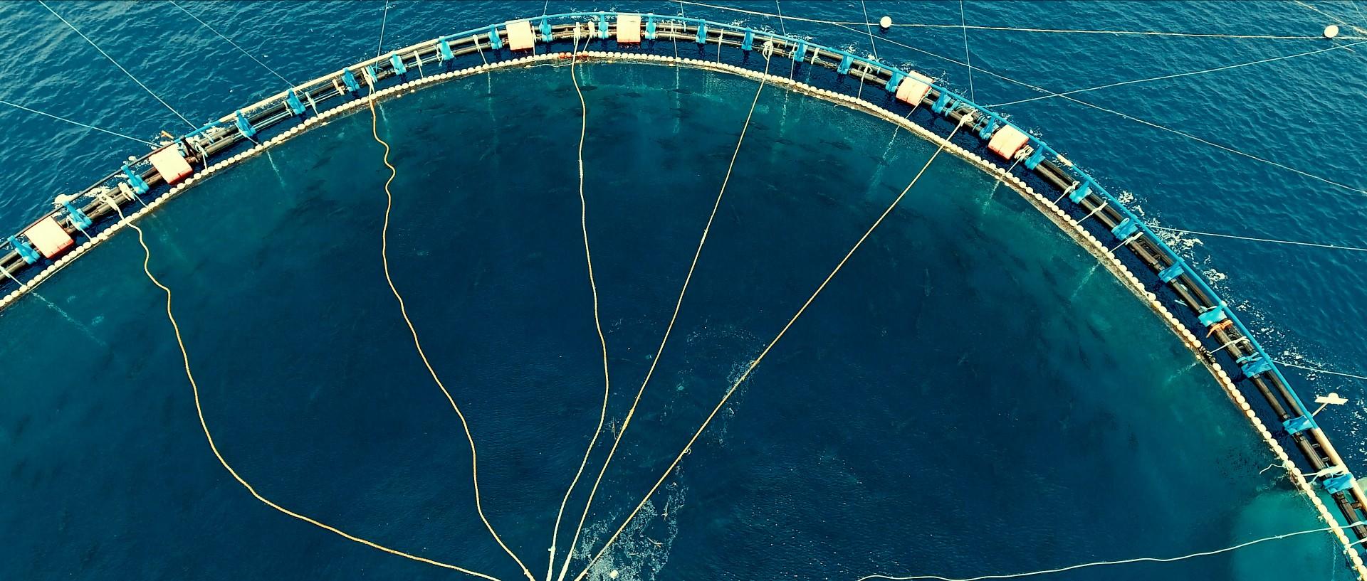 Seaspiracy : 9 infos mises en lumière par le documentaire (et leur véracité) - 3