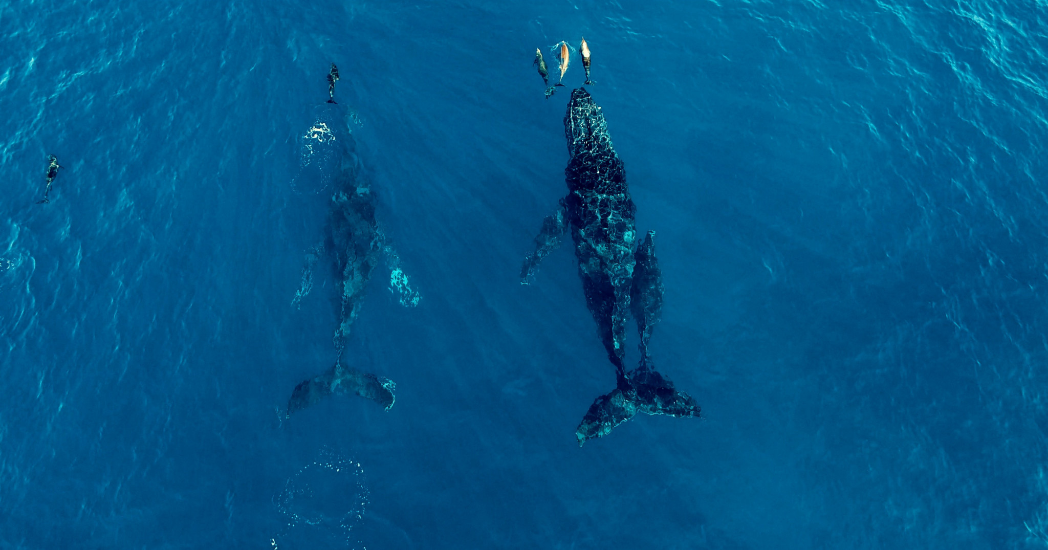 Seaspiracy : 9 infos mises en lumière par le documentaire (et leur véracité) - 2
