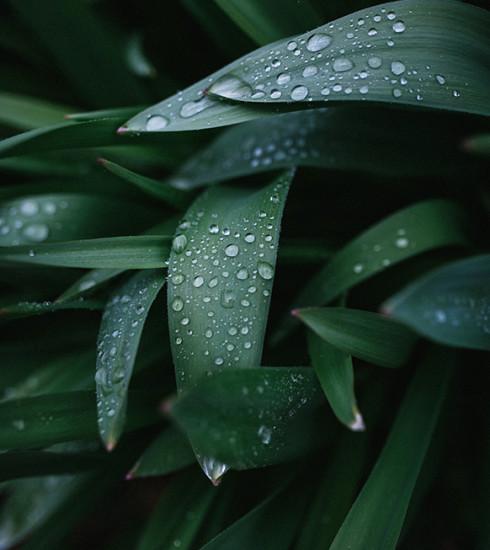 Repéré sur Pinterest : 4 moyens faciles de récupérer l'eau de pluie