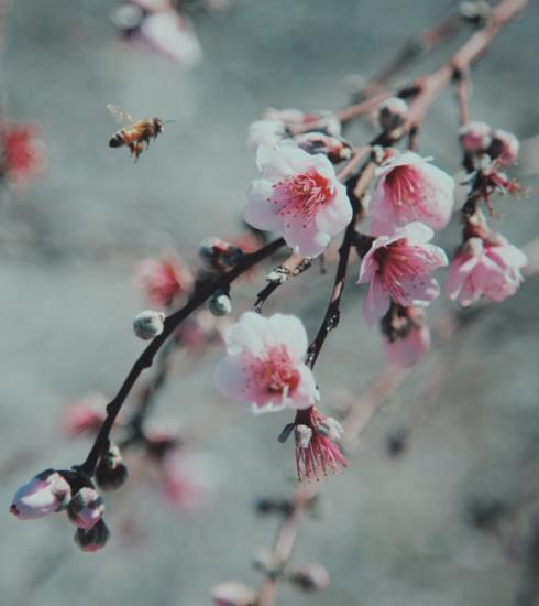 10 moyens naturels pour éloigner les insectes