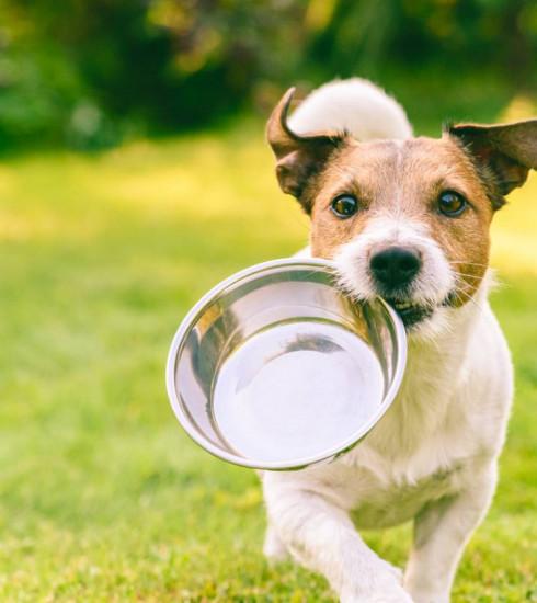 Bien-être animal : que faut-il savoir sur l'alimentation des chiens ?