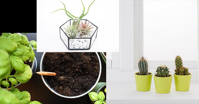 3 x hippe planten voor niet-groene vingers