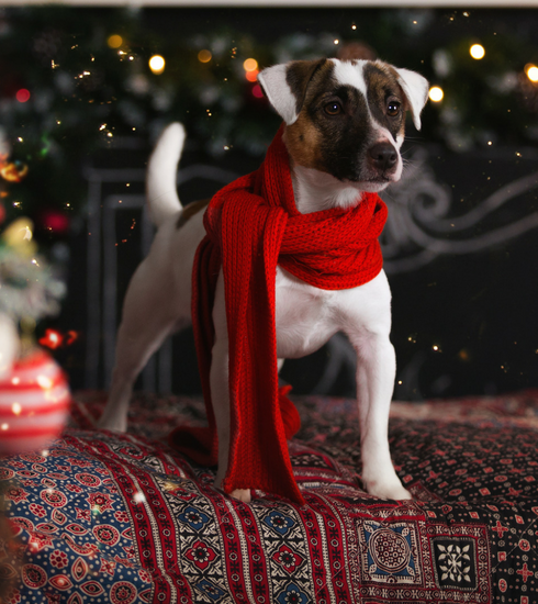 Je hond in de watten leggen met kerstmis? Het kan, met de kerstmaaltijden van Edgard & Cooper