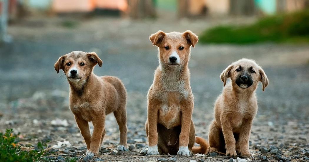 straathonden