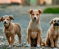 Straathonden in Spanje krijgen nieuwe thuis door Belgische vrouw