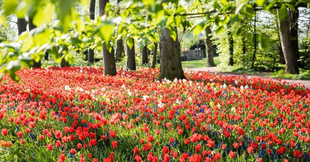 Floralia Brussels: Bloemen, bloemen en nog eens bloemen