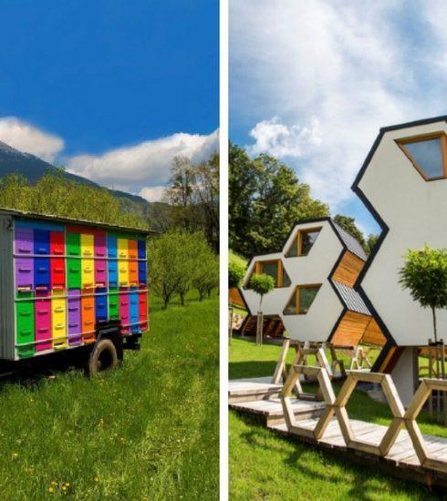 De eerste Wereld Bijendag komt eraan (en die moet je eigenlijk in Slovenië gaan vieren)
