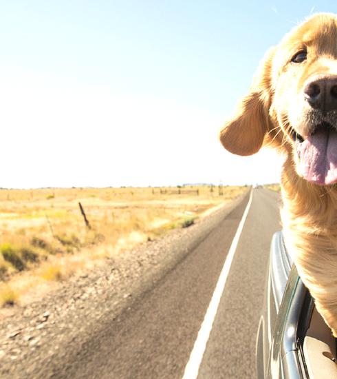 Op vakantie met je huisdier? Zo beleef je een zorgeloze trip