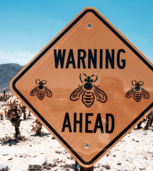Waarom wespen zo agressief zijn dit jaar