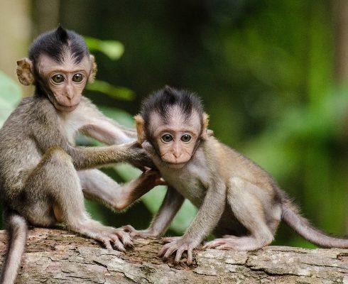 Werelddierendag: de 10 schattigste dieren ter wereld
