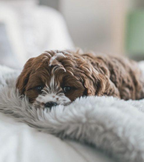 Dit is officieel het meest populaire hondenras op Instagram