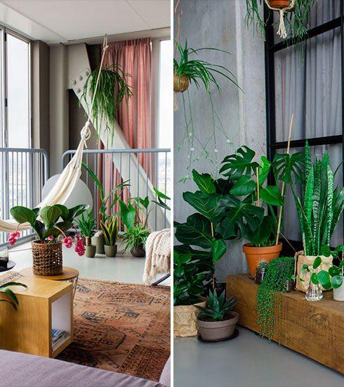 Eerste hulp bij kamerplanten: deze groenblijvers passen het beste bij jouw persoonlijkheid